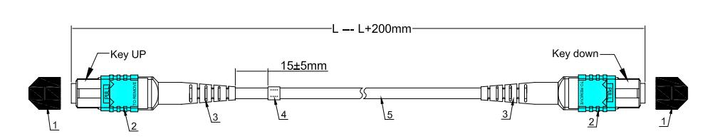 MPO 布线图
